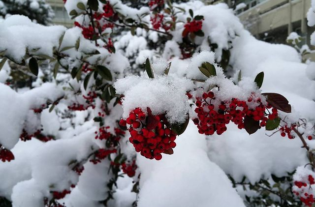 Kışın balkon çiçekleri nasıl korunur?