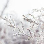 Kış Bitkileri