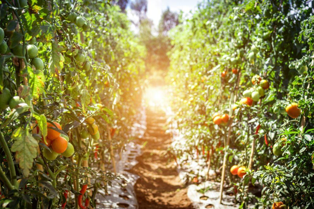 organik bahçe nasıl yapılır