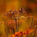 Organik Bahçe Tohumu Nasıl Seçilir?