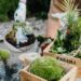4 En iyi Teraryum için Kullanılan Toprak