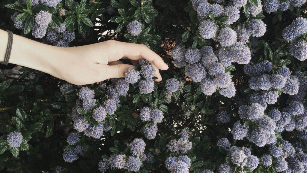Bitki dikimi nasıl yapılır?